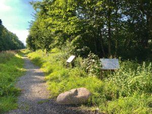 Grüne Ausgleichfläche in Molbergen