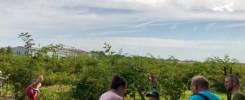 Ferienpassaktion 2019 der SPD Molbergen auf dem Obst- und Gemüsehof